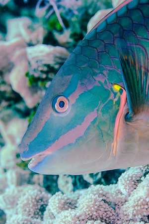 Cayman Brac 2012-07