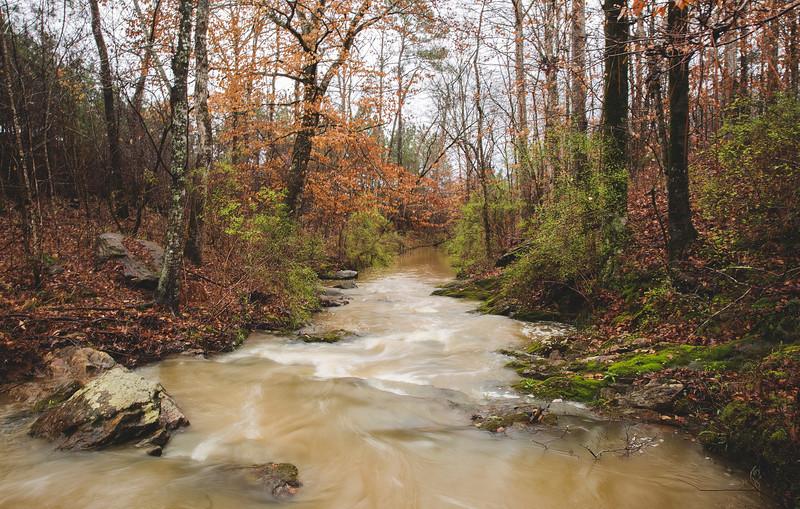 woods hike - 4.jpg