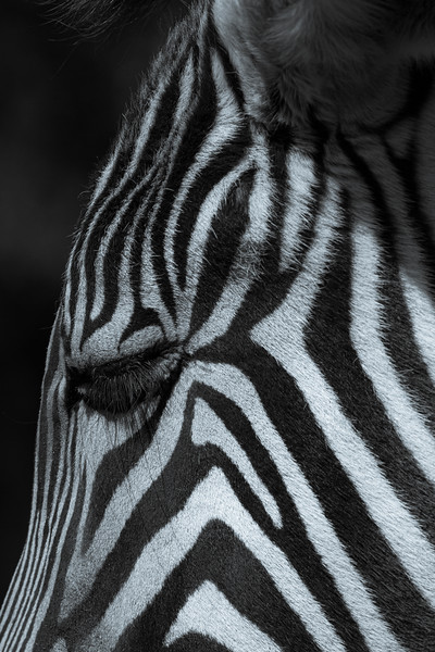 A Complete Guide To Zoo Photography