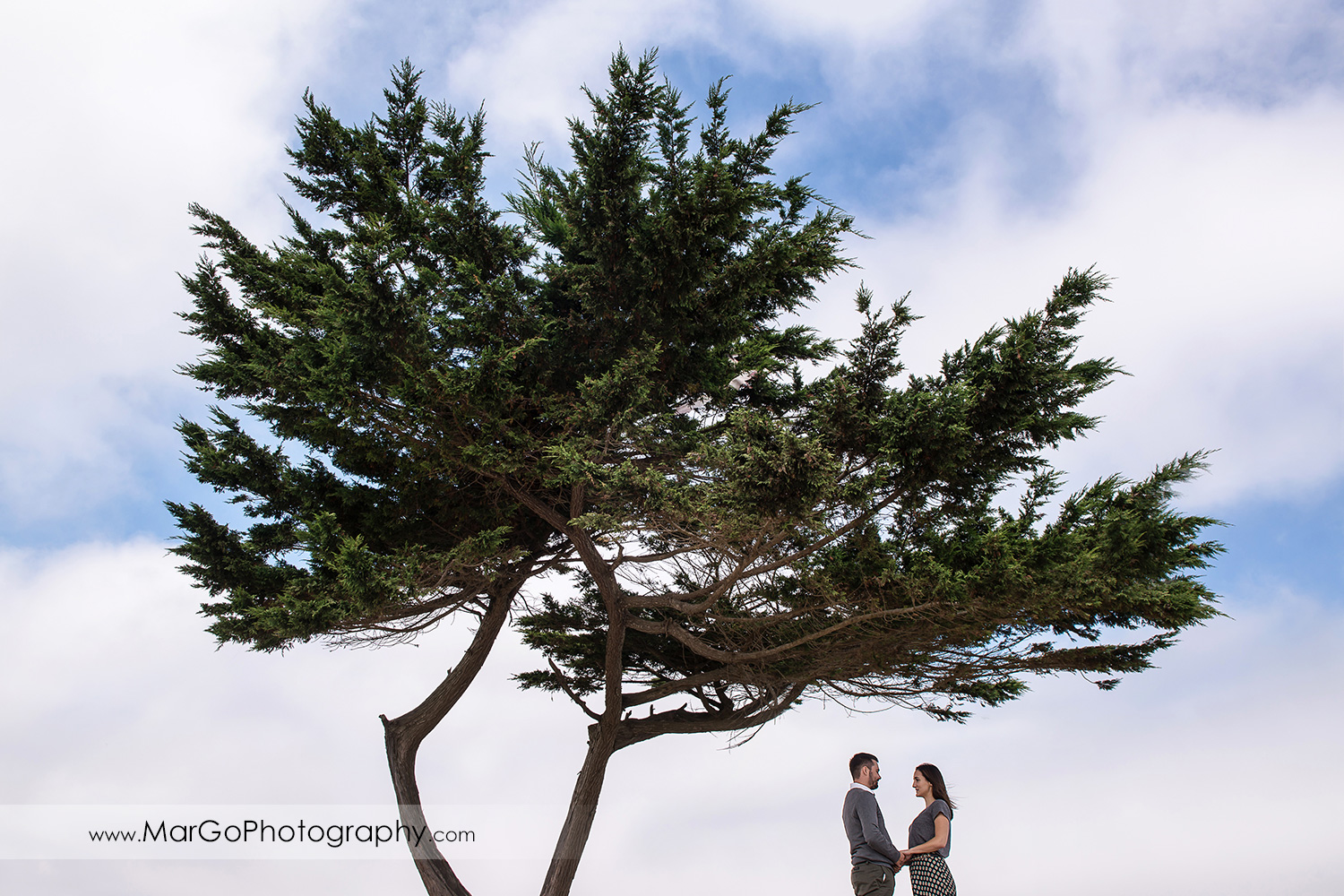 engagement session at Crissy Field in San Francisco - little people under the tree