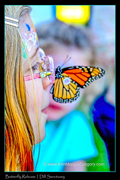 BUTTERFLY RELEASE - Dill Sanctuary