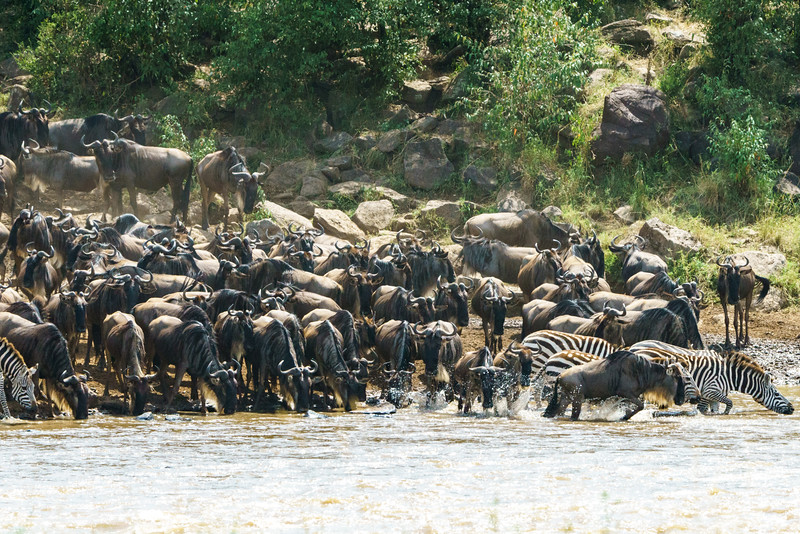 Kenya 2015-06566.jpg