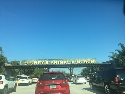 Animal Kingdom July 2017