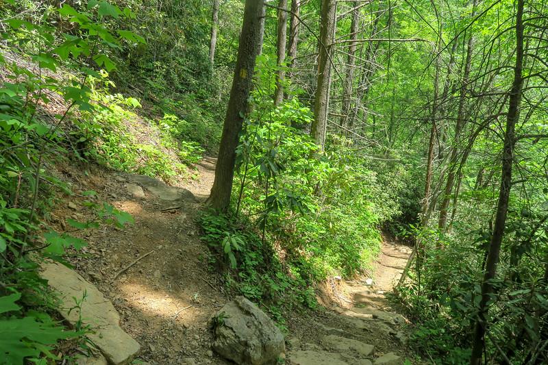 Spencer Branch-Big Creek Trail Junction -- 2,520'