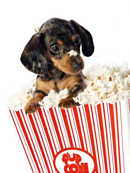 Pupcorn.jpg