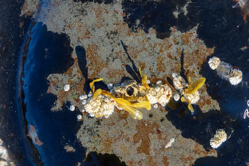 Rocks-beach-seaweed6.jpg