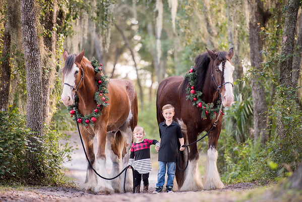 Clydesdales October 2019 - Johnson