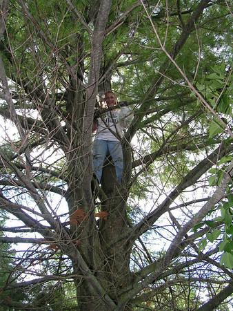 Tree Removal, Sep 08