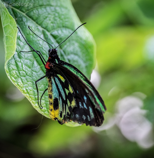 20140628_BUTTERFLY_WORLD (23 of 28)