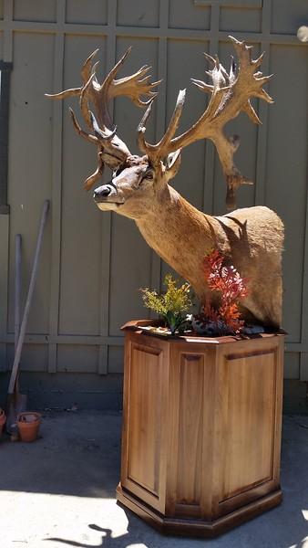 Red Stag Pedestal Mount