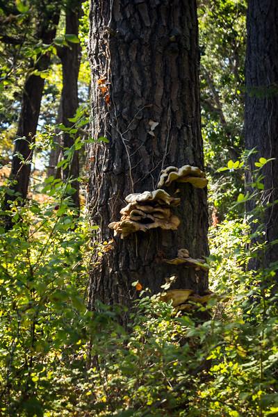 tree fungi.jpg