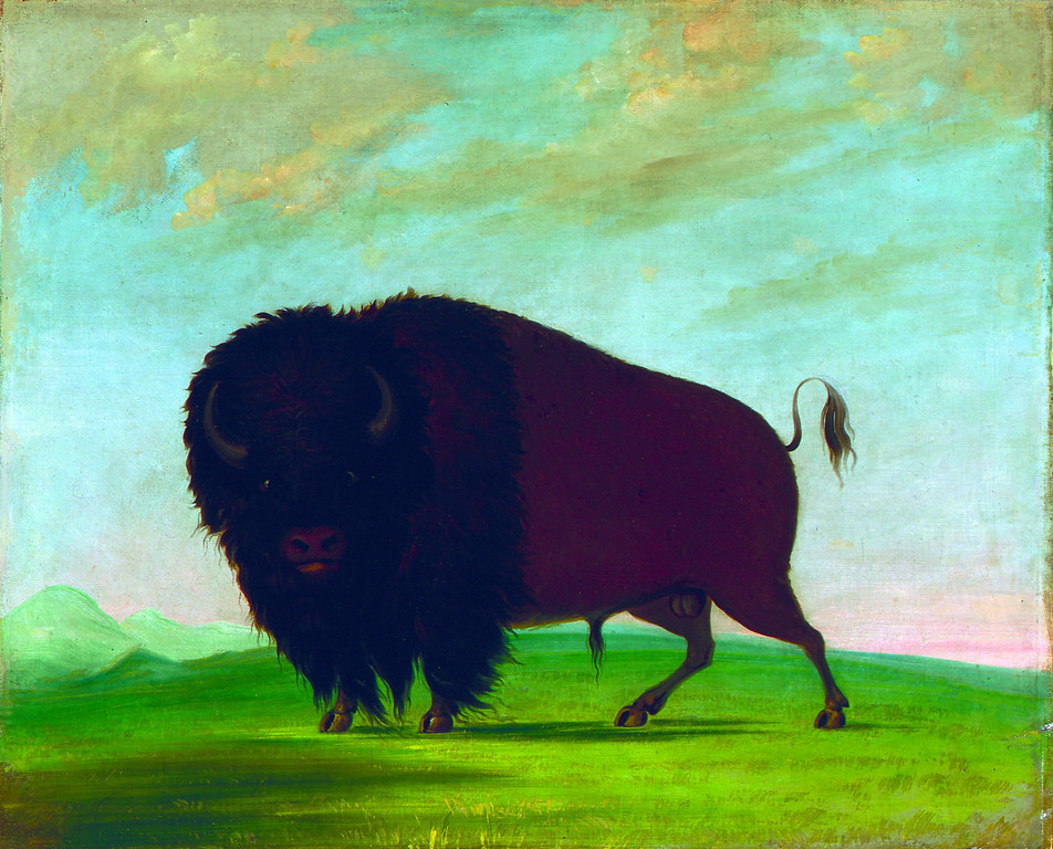 . George Catlin, Buffalo Bull, Grazing on the Prairie, 1832-1833, oil on canvas, Smithsonian American Art Museum, Gift of Mrs. Joseph Harrison Jr.