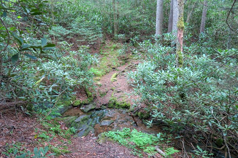 Rough Butt Bald Overlook-MST Access Trail -- 5,380'