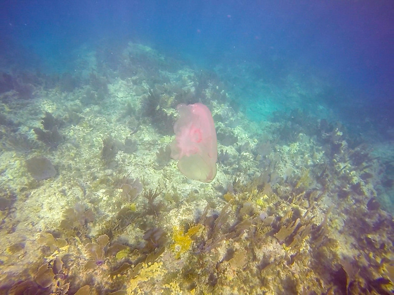 Ciesla-GOPR7027 - Jelly Fish-0001.jpg