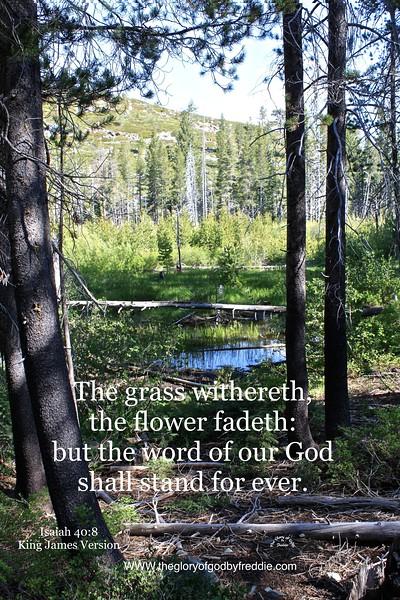 Isaiah 40-8 .jpg