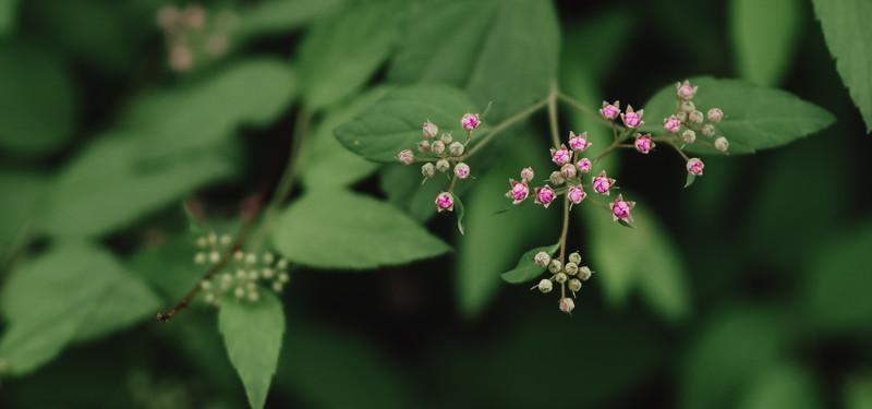 Pink Bud Flowers (1 of 1).jpg