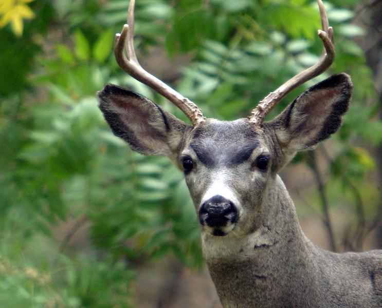 Lower Park Deer