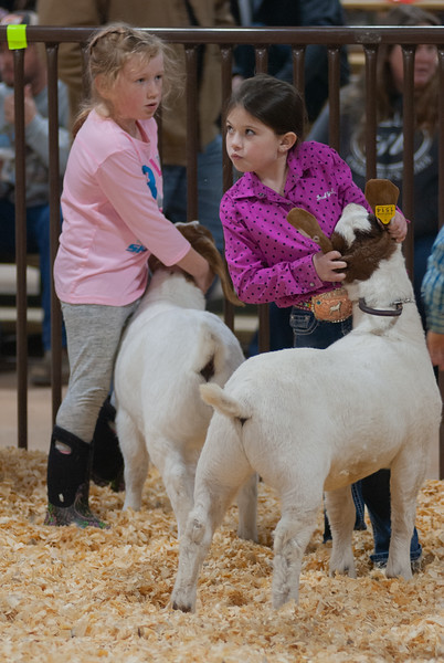 kay_county_showdown_goats_20191207-16.jpg