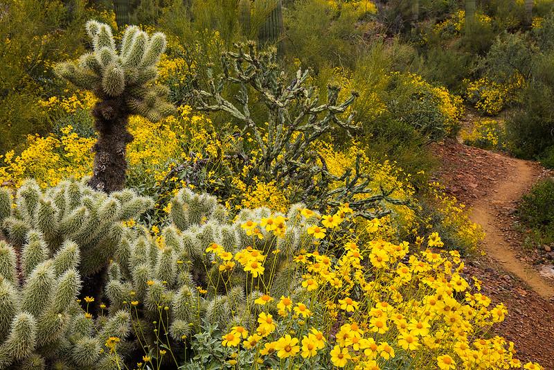 Black Canyon Trail2.jpg