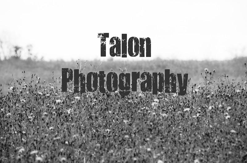 Field TP.jpg