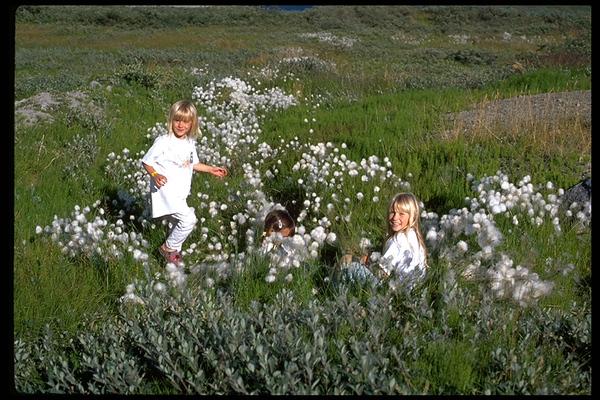 Greenland Trip, 1999