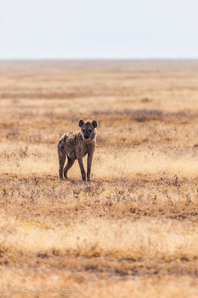 South_Serengeti-15.jpg