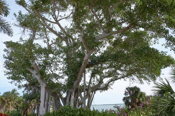 Useppa Botanical Walk