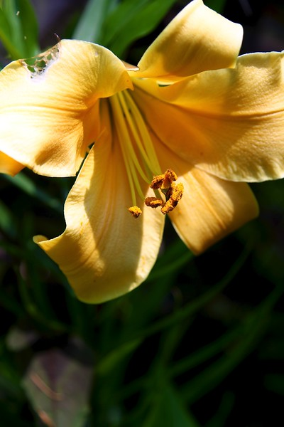 The garden today on July 7, 2012