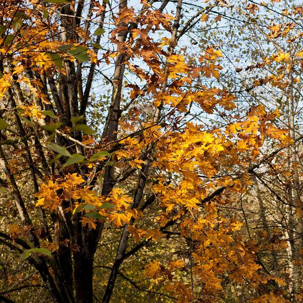 Bellevue Botanical Garden - November, 2012
