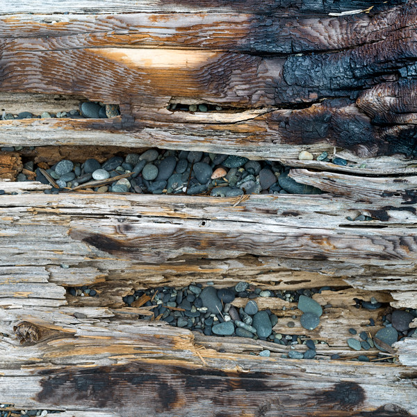 Close-up of driftwood and pebbles on Spiral Beach, Victoria, British Columbia, Canada