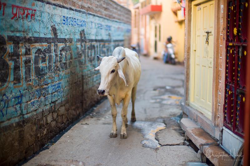 20111112_jodhpur3M9_9509.jpg