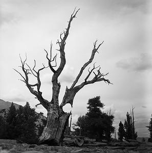White Mountains Film
