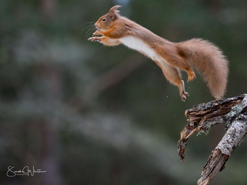 RedSquirrelBootCamp_120217_490.jpg