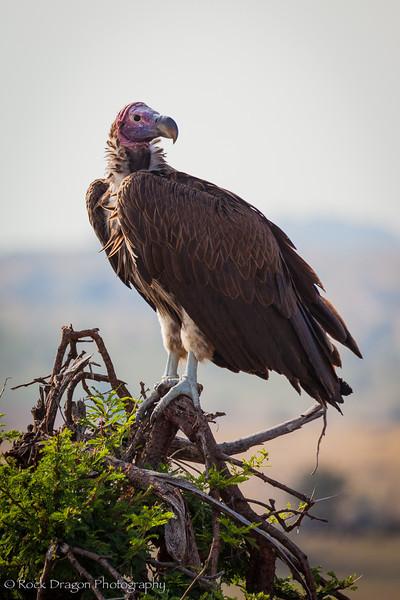 South_Serengeti-63.jpg
