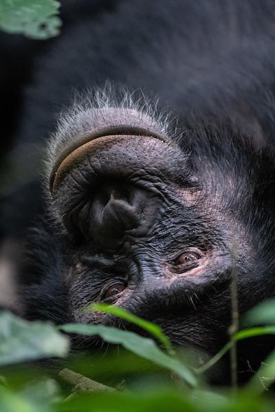 Uganda_T_Chimps-1428.jpg