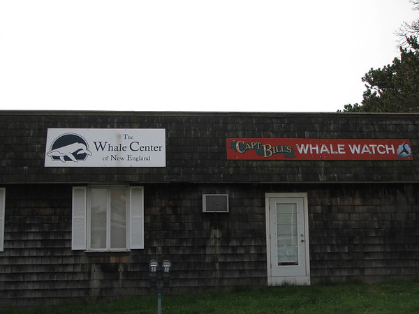 Day 4: Whale Watching