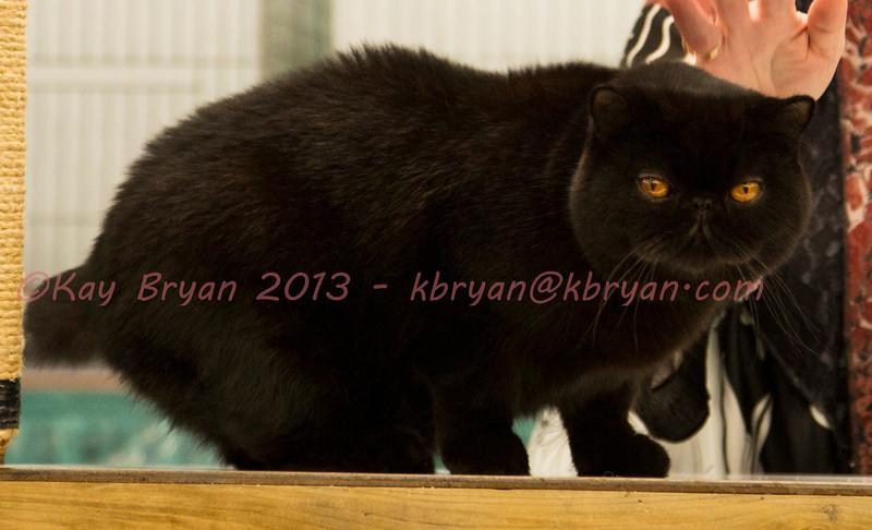 CatShow2014016.JPG