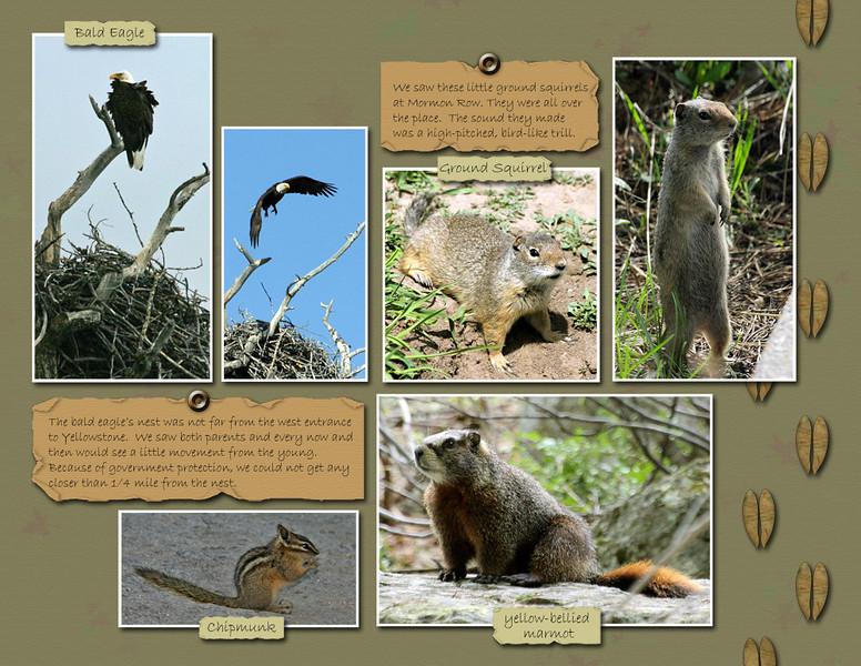 21-Animals-2.jpg
