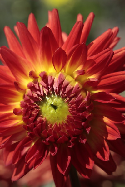 Conservatory of Flowers  & Dahlia Garden