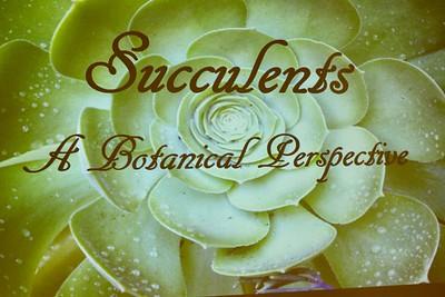 March 2018 'Seasonal Succulents'