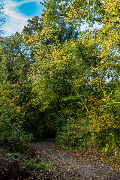 850_Woods Mill-5594.jpg