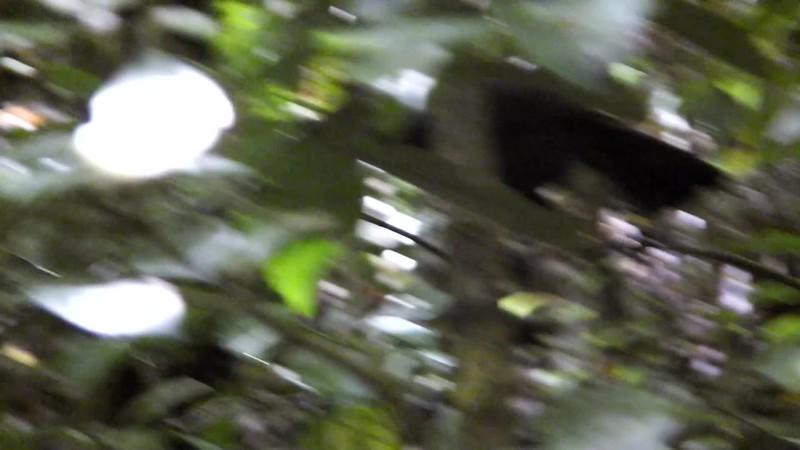 Nature Trek NZ 2014