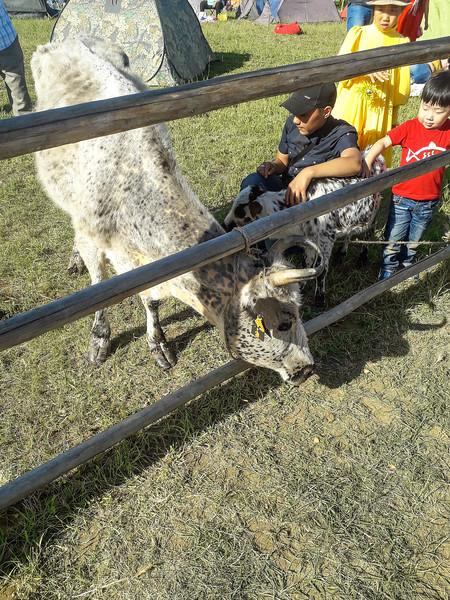 Yakut Cow