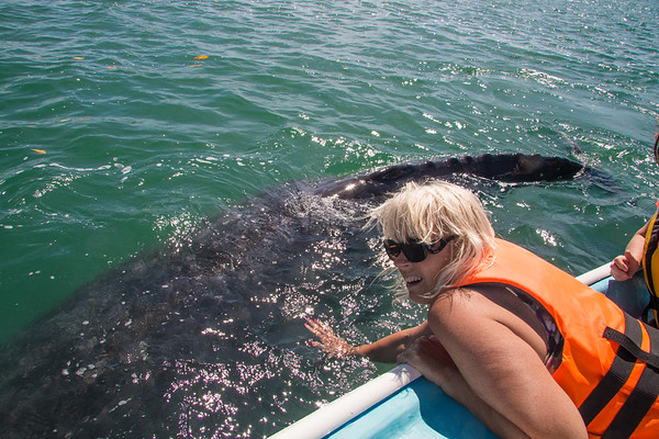 Cabo/Magdalena Bay Gray Whales, 2/23/16