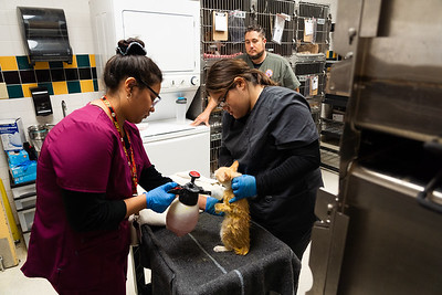 Pebble Hills Students at Animal Services