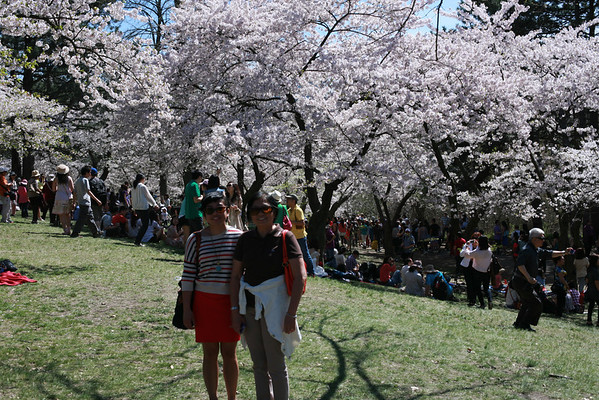 A Sunday Walk - Cherry Blossom at High Park