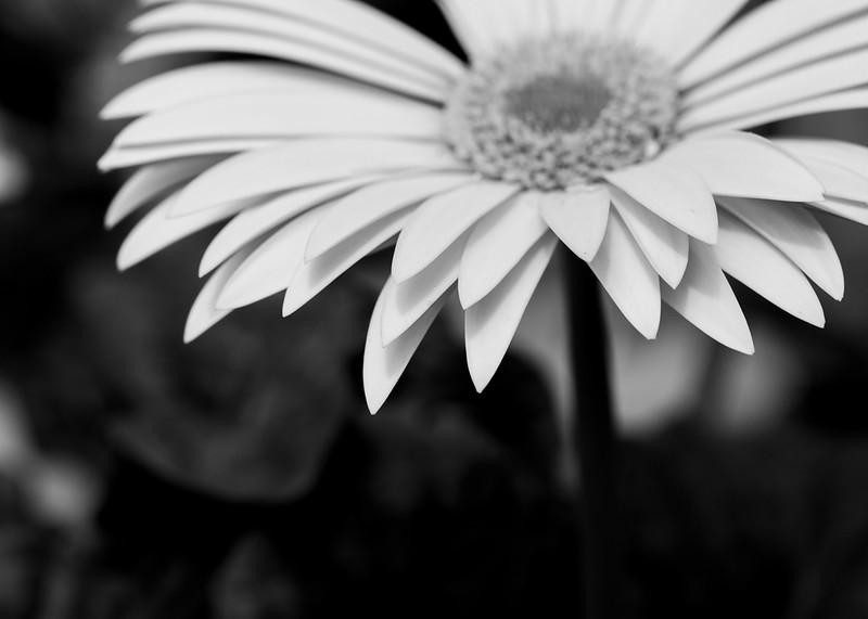 FineArt_Flowers_051520_0298.jpg