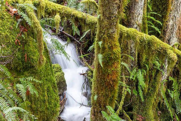 Woody Trail to Upper Falls, February 27, 2021