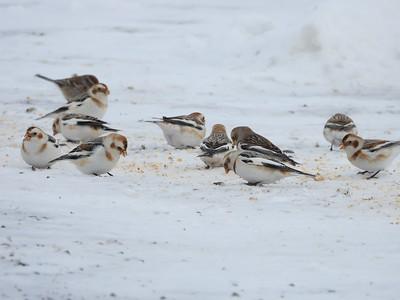 20200209 Port Hope Birding