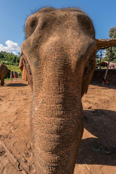 elephant-sanctuary-chiang-mai-3.jpg